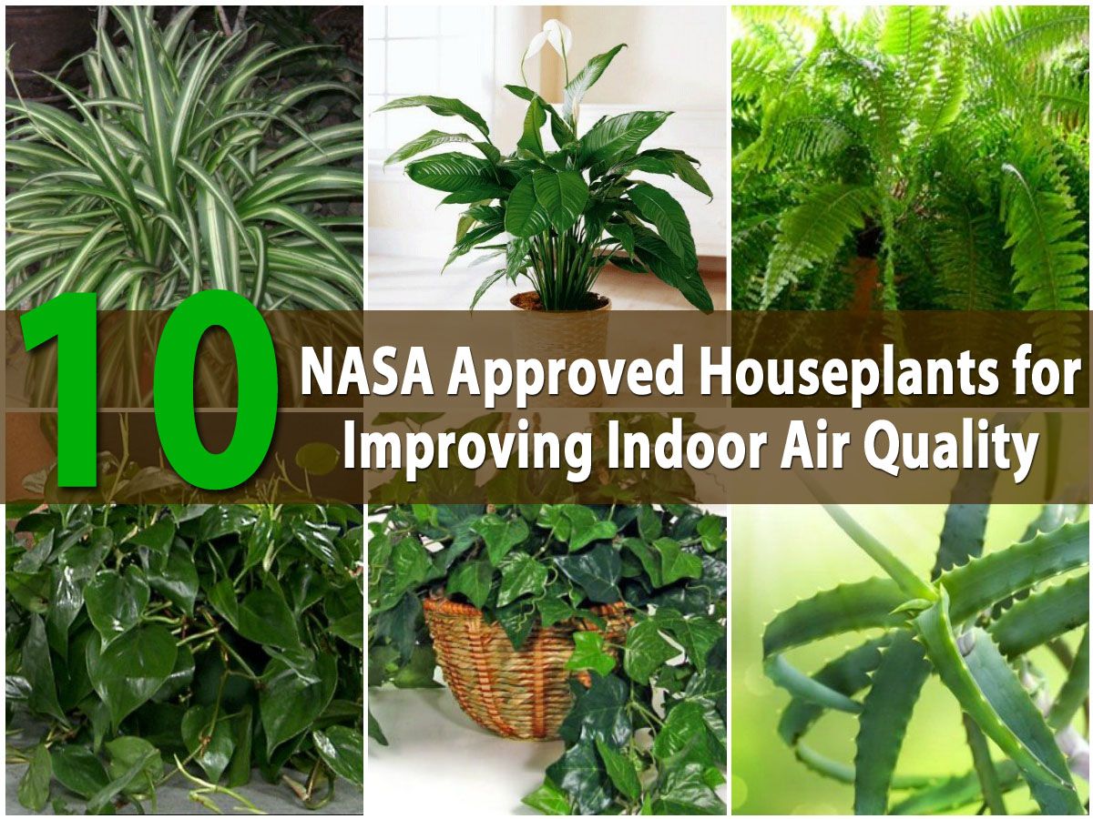 10 Best Houseplants That Purify The Air In Your Home Or